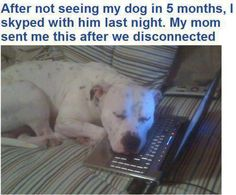 Just one more reason dogs are better then men