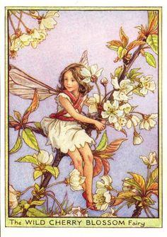 wild cherry blossom fairy
