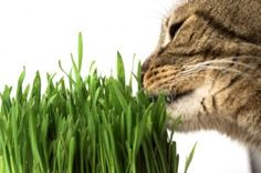 What to plant in your Cat Garden . . . Or. . . let us build and plant one for you!