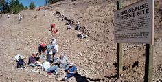 Stonerose Interpretive Center & Eocene Fossil Site