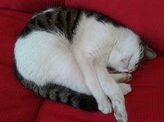 Junior Sleeping! | Bored Panda