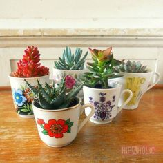 Vintage Style Succulents in vintage cups Smith this reminds me of something you'd like/do! :) - Succulents in vintage cups.It is nice to have a selection of different succulents and cups.Place them in a group on your table or shelf