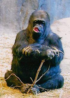 zoo :: louisville ky