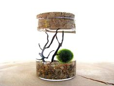 Hey, I found this really awesome Etsy listing at https://www.etsy.com/listing/555367822/stocking-stuffer-marimo-moss-ball