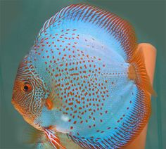 discus - Google Search                                                                                                                                                                                 More