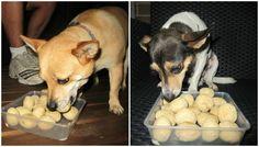 CHICKEN BALL DOG TREATS : official taste testing