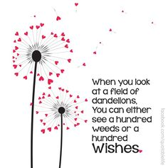 When you look at a field of dandelions . . . | Dandelions