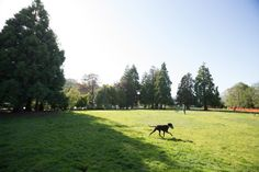 A Guide to San Francisco's Lesser-Known Parks - The Bold Italic - San Francisco