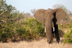 Parque Kruger Santa Lucia, Elephant, Africa, Animals, Lakes, Tourist Spots, Places, National Parks, Paths