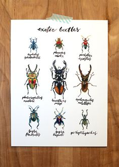 "Exotic Beetles 8"" x 10"" Art Print"
