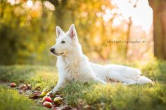 Photo A day in autumn by Dana Thimel on 500px