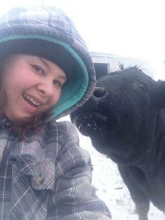 Great #Felfies Amanda Brodhagen Farm Life, Farm Animals, Amanda, Beef, Meat, Steak