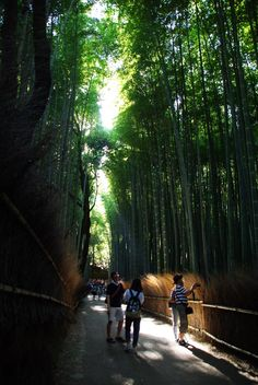 We searche travel and airline sites to help you find cheap flights at best prices. Kyoto, Blog Japon, Tokyo, Destinations, Jolie Photo, Travel Information, Beautiful World, Japan, Module