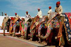 la parade des éléphants et des cornacs, Inde, India, Rajasthan \\\  the parade of elephants and mahouts, India, India, Rajasthan