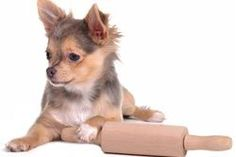 Dog Allergies To Advance Puppy Food