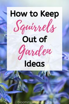 Are squirrels destroying your beloved garden and plants? There are various ways to keep squirrels out of your plants. Click on the pin for how to keep squirrels out of garden ideas. #squirrels #keepsquirrelsout #squirrelsoutofgarden #gardenpests