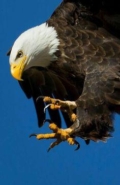 vs.      Eagle Attack