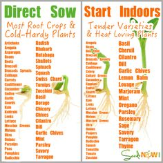 How do I Know Which Seeds to Direct Sow and Which to Seeds to Start In