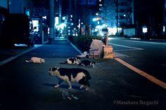 BLOG「路上のルール」 〜東京の街に暮らす野良猫たちの記録写真〜: 貫禄