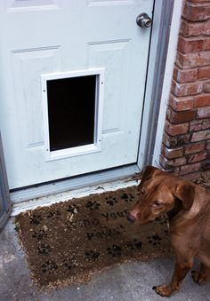 1000 ideas about pet door on pinterest hide litter - Exterior door with pet door installed ...