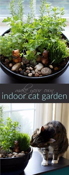 DIY Cat Hacks - Make Your Own Cat Indoor Garden - Tips and Tricks Ideas for Cat Beds and Toys, Homemade Remedies for Fleas and Scratching - Do It Yourself Cat Treat Recips, Food and Gear for Your Pet - Cool Gifts for Cats diyjoy.com/... #catsdiytreats #catsdiyhacks #cattipsandtricks