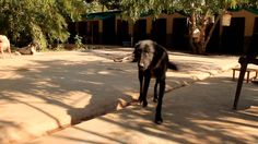 Daisy couldn't walk from pain - YOU helped us save her. Animal Aid Unlim...