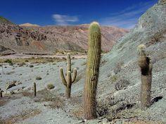 A bela Cuesta de Lipán é uma das vias de acesso à Quebrada de Humahuaca #Argentina
