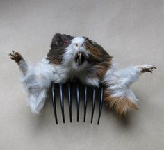 Guinea Pig Hair Piece