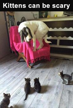 Stop scaring the dog, kittens!