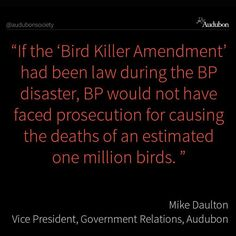 Tell your senators to oppose the ''Bird Killer Amendment.'' The House-passed rider to the Commerce, Justice and Science Appropriation Bill is nothing less than a reckless sneak attack on America's birds. By barring enforcement of the Migratory Bird Treaty Act, migratory birds would be vulnerable to almost unlimited harm from industrial activity, poorly sited energy projects, and even deliberate killing.