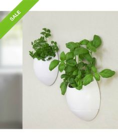 Self Watering Herb Pot. Self-watering herb pot. Grow your own herbs and plants indoors. These self-watering pods are easy to install and remove from any wall or window with integrated adhesive stripes. Comes as a set of 2 for indoor use only. Herb Garden Planter, Herb Planters, Herb Pots, Hanging Planters, Herbs Garden, Plant Pots, Eco Pods, Herb Wall, Design3000