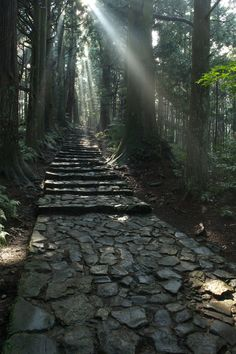 Forest path, World Heritage Kumano Kodo Pilgrimage, Wakayama, Japan Places Around The World, Around The Worlds, Wakayama, Forest Path, Dalai Lama, Pilgrimage, Science And Nature, Historical Sites, Pathways