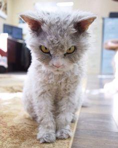 Alberto el gato con cara de mal humor