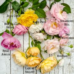 Celebration of Roses via Hedgerow Rose