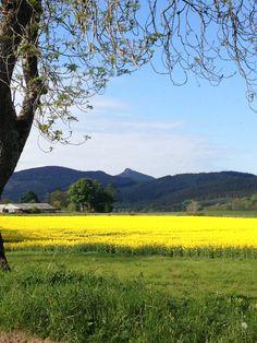 Bennachie-The Mither Tap in Springtime