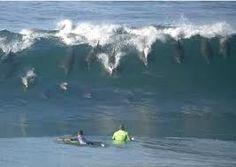 Dolphins surfing, Monkey Mia, Western Australia!