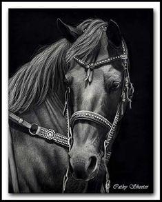 Star Studded - American Quarter Horse