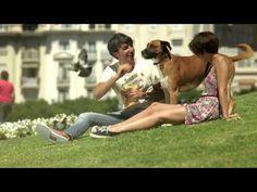 Señales de bondad sorprenden en la ciudad. - YouTube Video Clip, Videos, Youtube, Couple Photos, Coca Cola, Music, Movies, Making Signs, Happiness