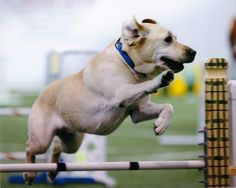 Agility Gear, Inc. - Specializing in Dog Agility Equipment and Canine Supplies