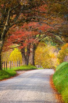 Sparks Road in Cade's Cove, Great Smoky Mountains National Park, TN - This is where my heart longs to be!