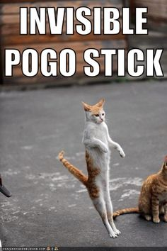 http://catplanet.org/wp-content/uploads/2014/02/invisible-pogo-stick.jpg