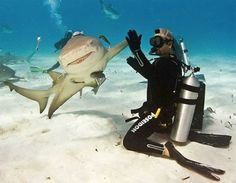 Swim with the sharks!
