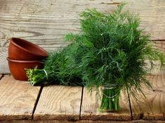 Kôpor na pokazený žalúdok, aj pre čerstvé mamičky Salvia Officinalis, Natural Antidepressant, Drying Dill, Caraway Seeds, Antioxidant Vitamins, Fresh Dill, Coriander, Parsley, Medicinal Plants