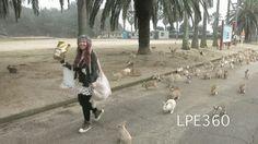 "Omgggg so many bunnies!! ""The Invasion Has Begun"""