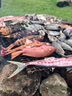 Traditional Easter Island fish barbeque. Manado, Easter Traditions, Easter Island, Beef, Fish, Traditional, Meat, Ox, Steaks