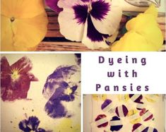 Nature's colors are found in Pansies! Pansies are great flowers to press because they naturally have thin petals. These flowers are also good for creating your own eco-dye. How about a DIY bag made from nature's colors? Cut Flowers, Dried Flowers, Diy Bag Making, Pressed Flower Art, Garden Gifts, Pansies, Garden Plants, Beautiful Flowers, Create Your Own