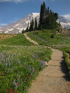 Favorite picture ever of my favorite spot ever.  On the Skyline Trail on Mt Rainier.  I want to go back now!