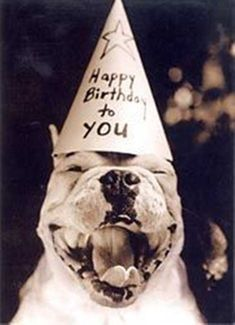 "Funny birthday pictures we collected the most adorable Happy funny birthday images ""Two tips on your birthday; Happy Birthday Pitbull, Happy Birthday Best Friend, Funny Happy Birthday Wishes, Birthday Wishes For Myself, Funny Birthday, Happy Birthday Animals, Birthday Ideas, Happy Birthday Vintage, Birthday Woman"