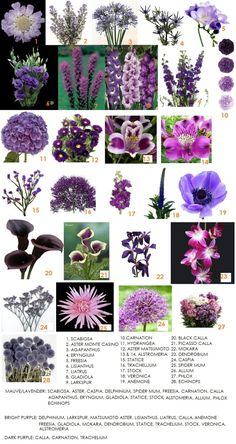 website has several boards like this with flowers sorted by color.