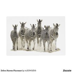 Add some extra spice to your table setting with Zebra placemats from Zazzle! Design your placemat with your own artwork or favorite photo. African Safari, Placemat, Wildlife Photography, Dining, Unique, Artwork, Kitchen, Animals, Dinner
